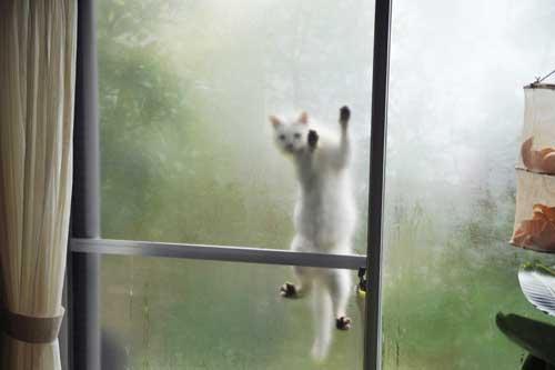 安彦幸枝『庭猫』<br>台北写真展のお知らせ