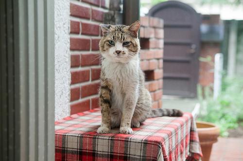 安彦幸枝<br/>待望の新作写真集<br/>『庭猫スンスンと家猫くまの日日』