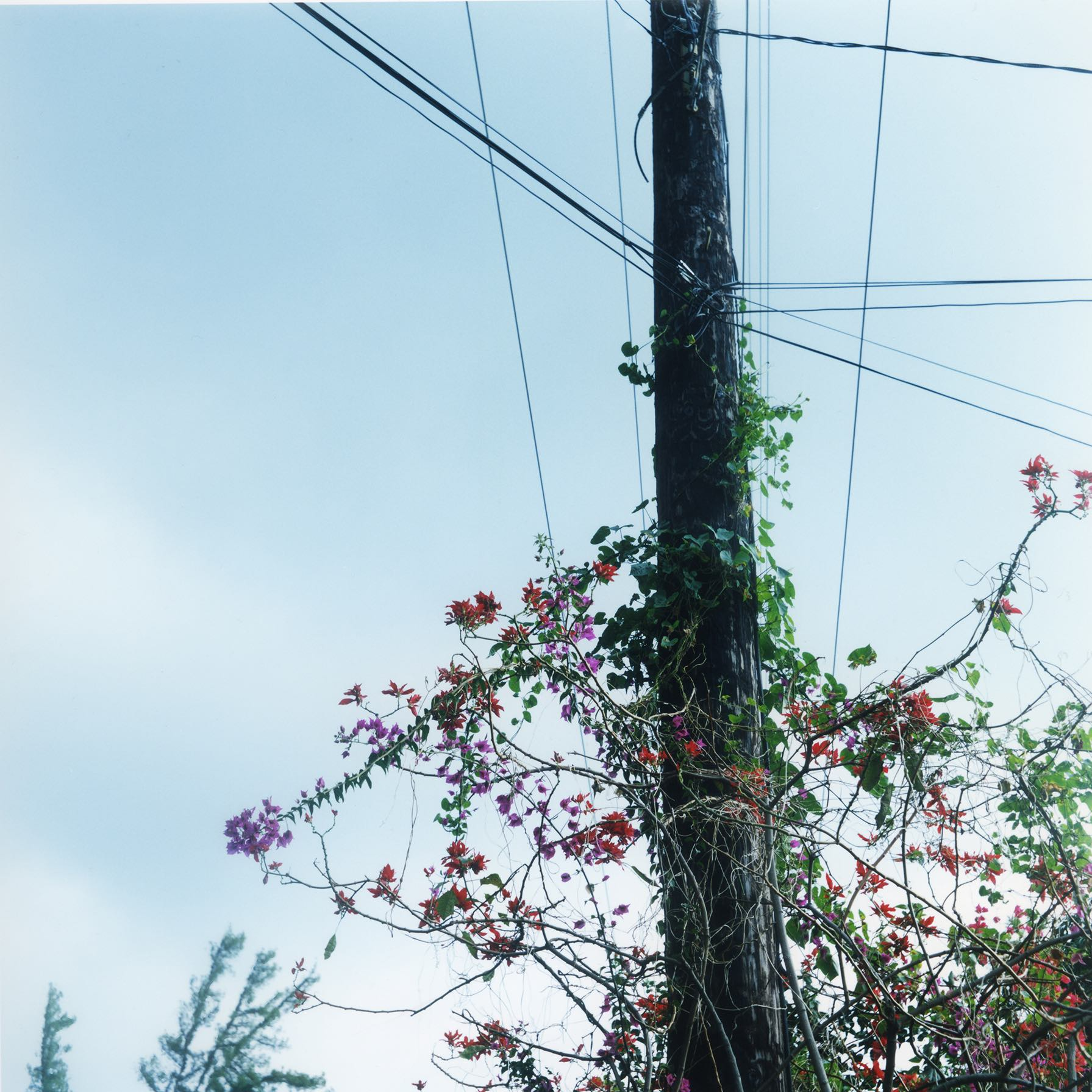Untitled-29-T-mini.jpg