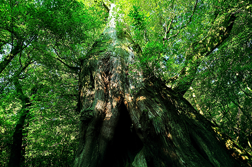 世界の森を撮り続ける男の集大成<br/> 小林廉宜写真集『森 PEACE OF FOREST』発売