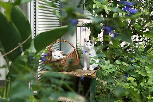安彦幸枝 作品展示「どこへ行っても猫と犬」<br/>アフとサブも登場